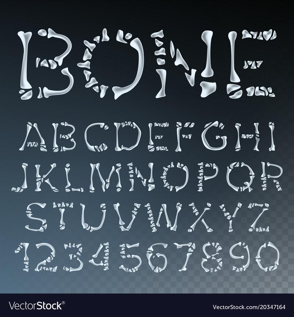 Bone font letters anatomy abc alphabet