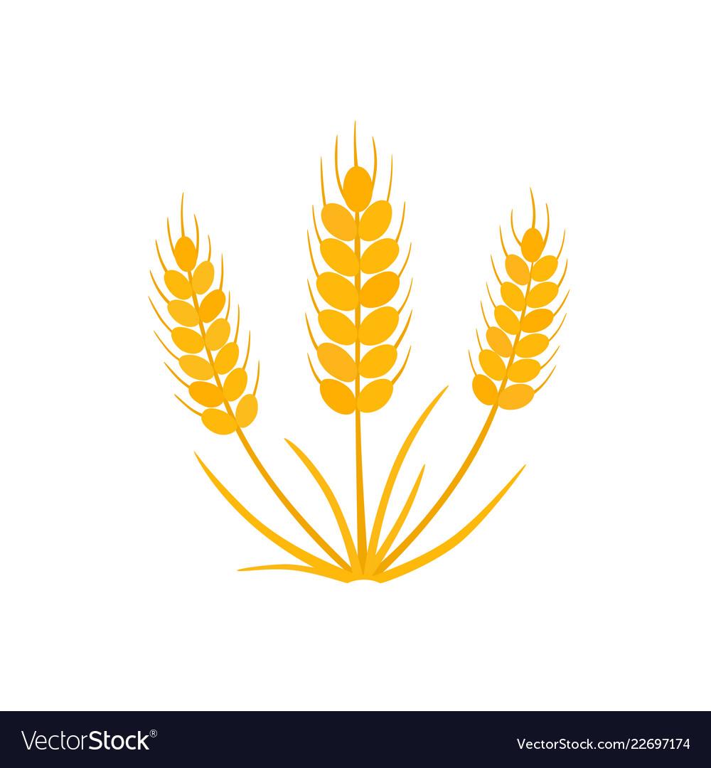 Grain wheat icon on white