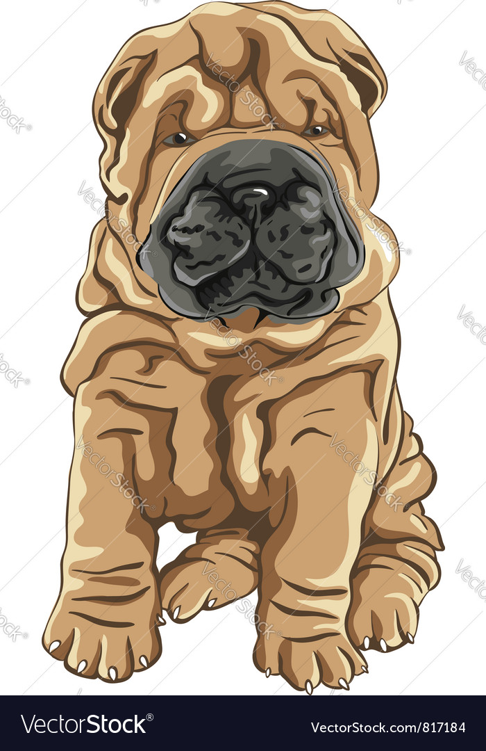Cute red Shar Pei dog puppy smiles
