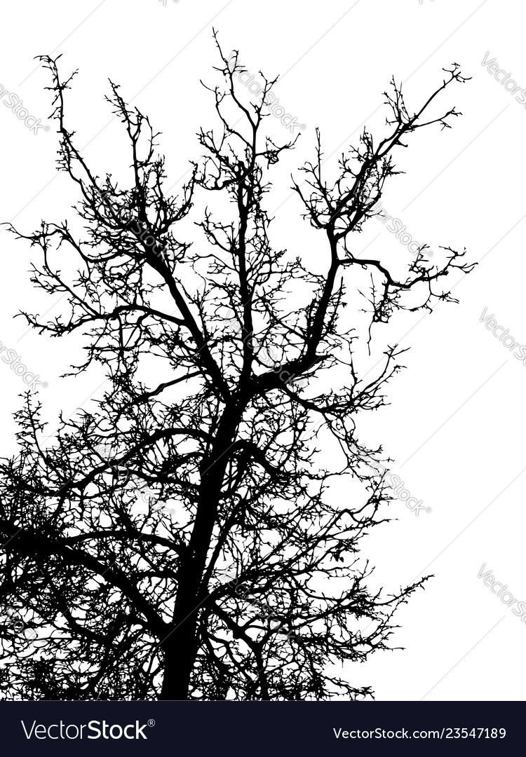 Black leafless tree branches