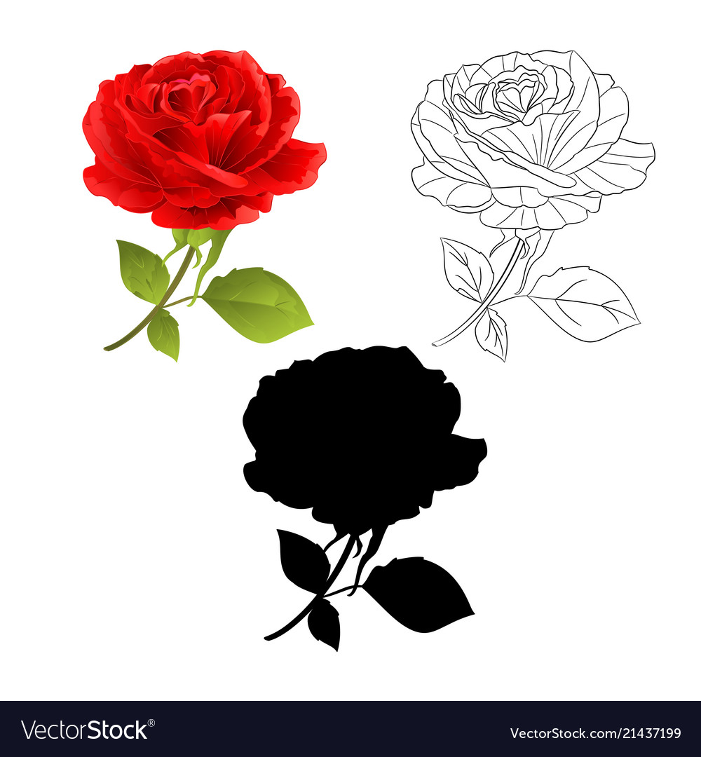 Flower red rose natural and outline