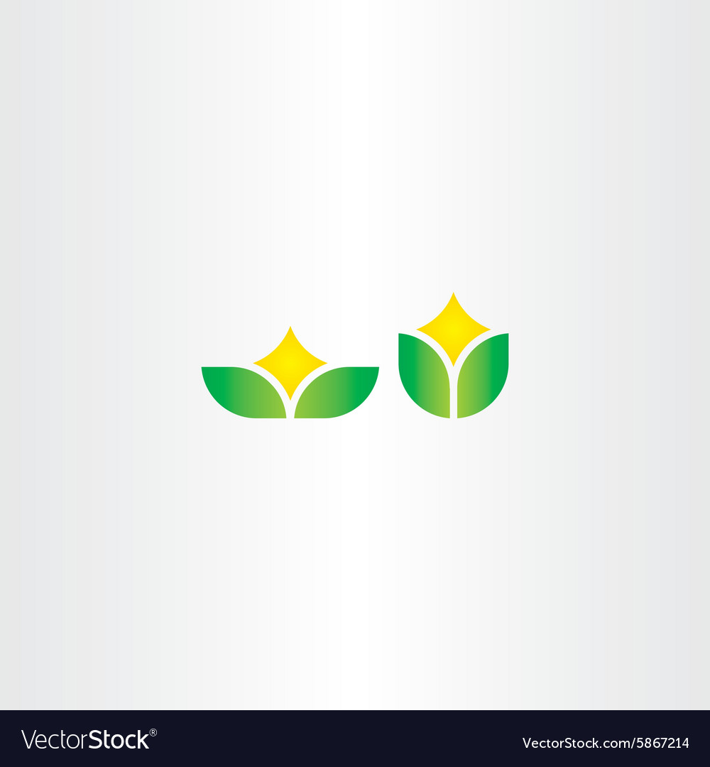Eco green natural leaf with star flower vector image