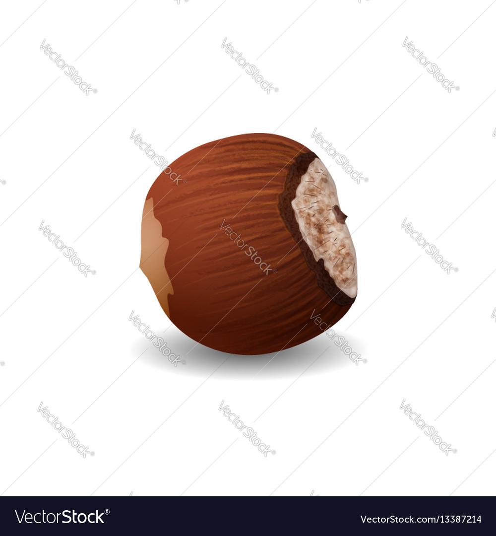 Hazelnut isolated on a white background