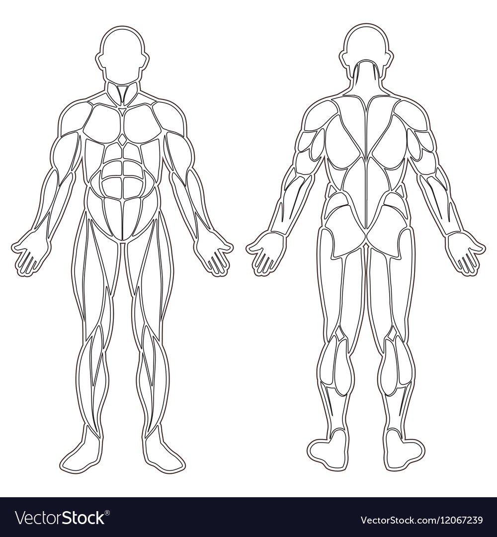 Human body muscles silhouette vector image on VectorStock