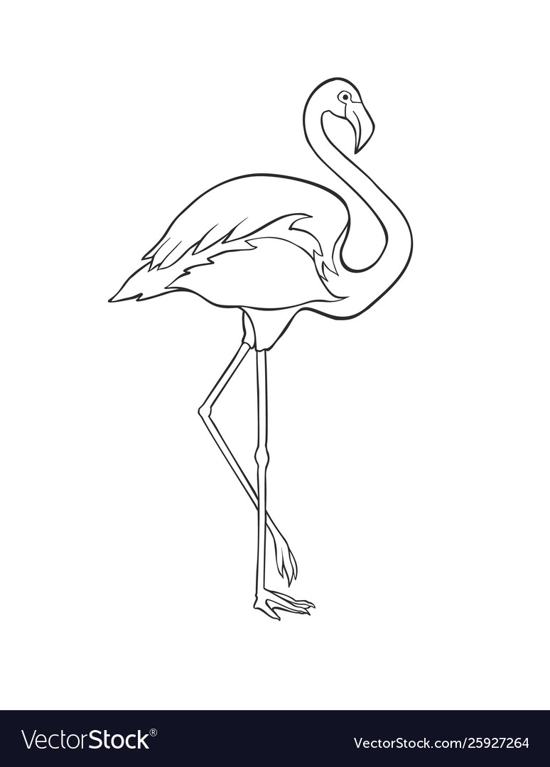 Black and white image flamingo isolated on