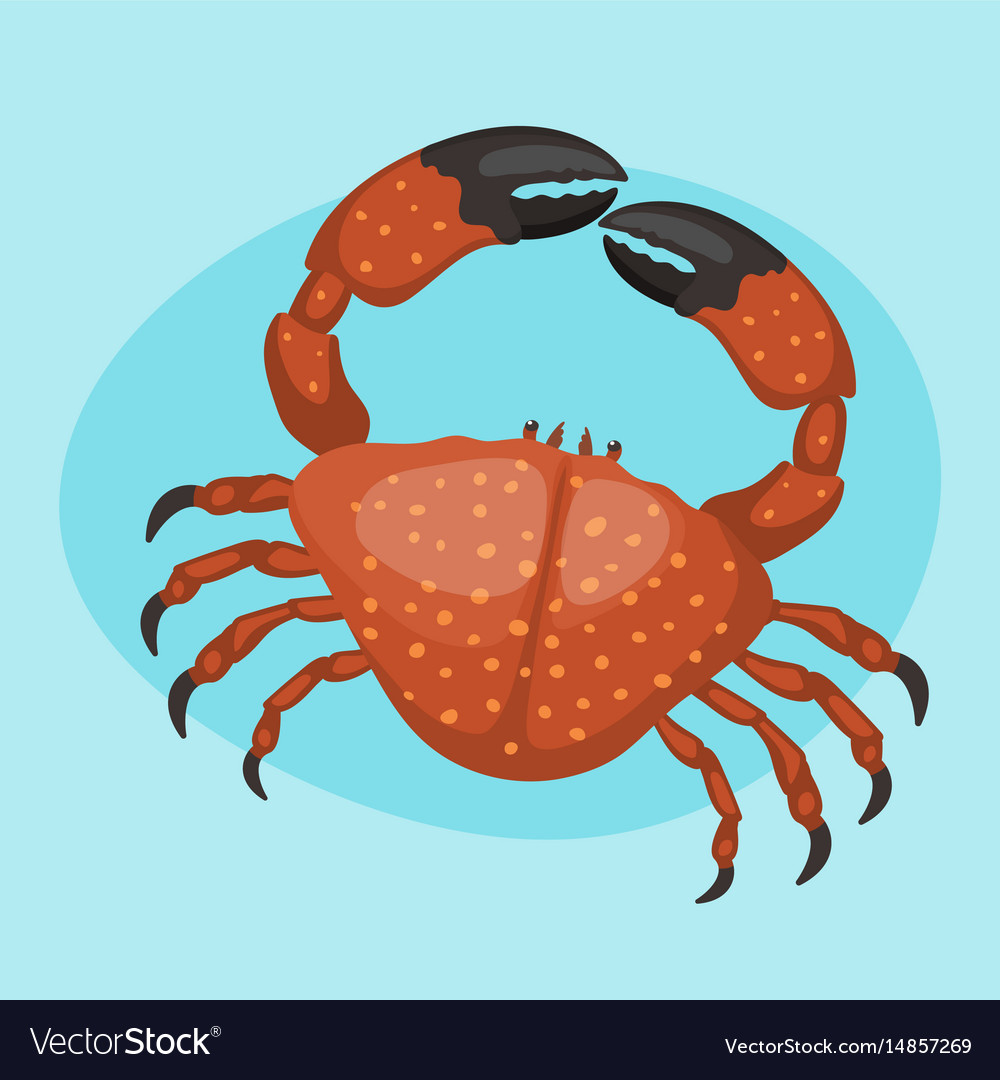 Cartoon crab flat fresh vector image