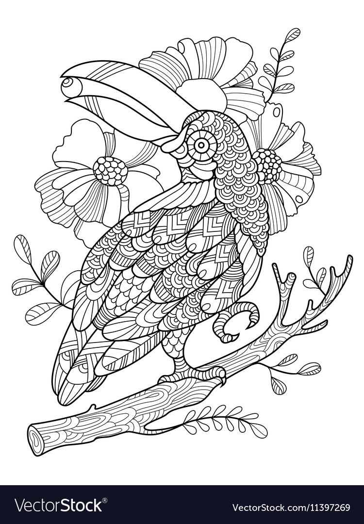 Toucan bird coloring book for adults