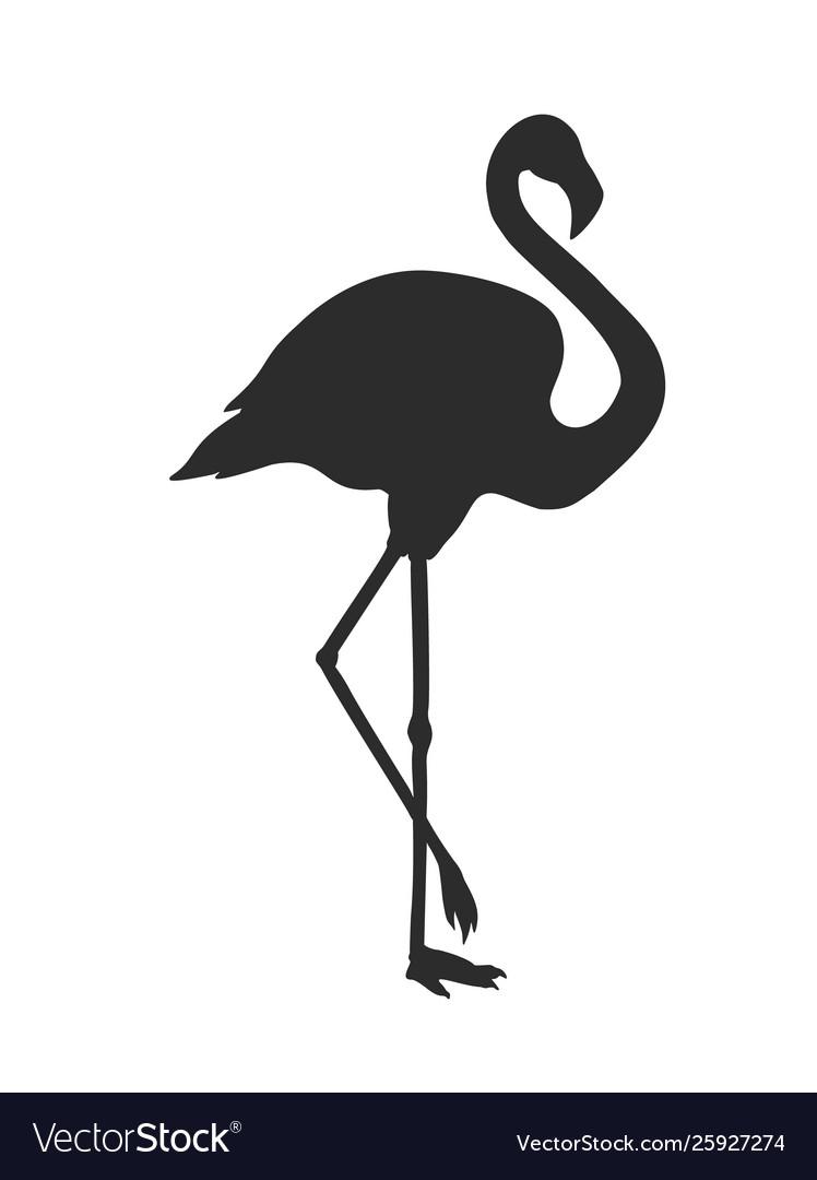 Silhouette flamingo isolated on white