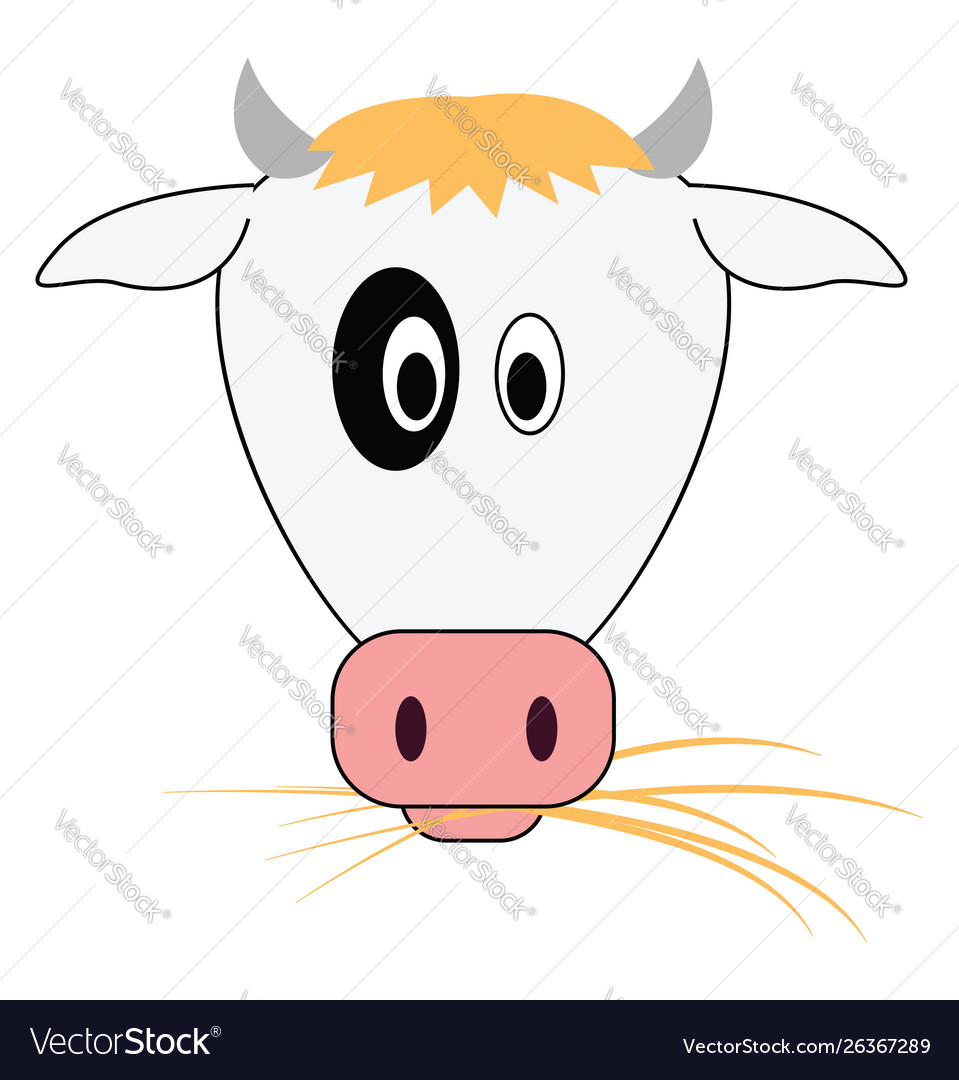 Cow eating grass on white background
