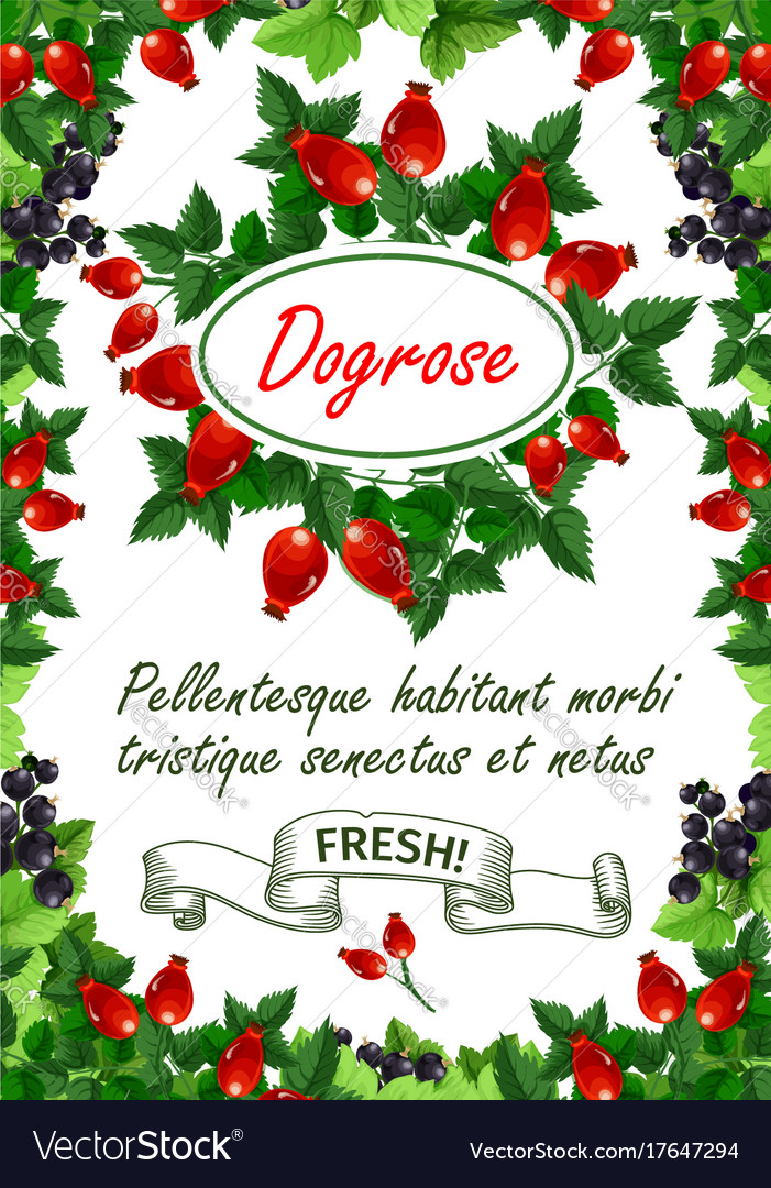 Poster of fresh dogrose berries and fruits