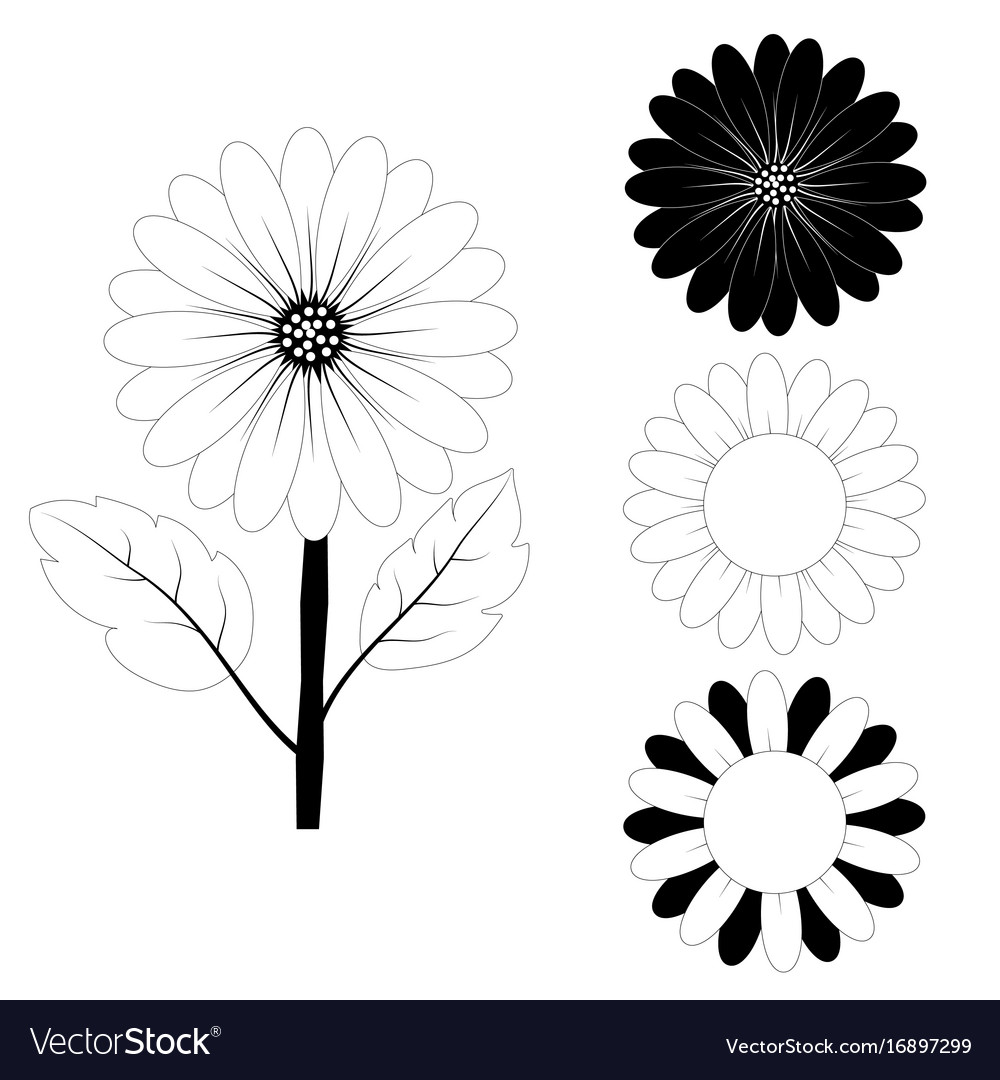 Sunflower Drawing Black And White Royalty Free Vector Image
