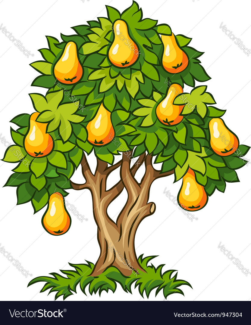 Pear tree with ripe fruits vector image
