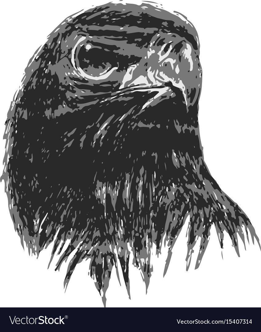 Eagle drawing in art