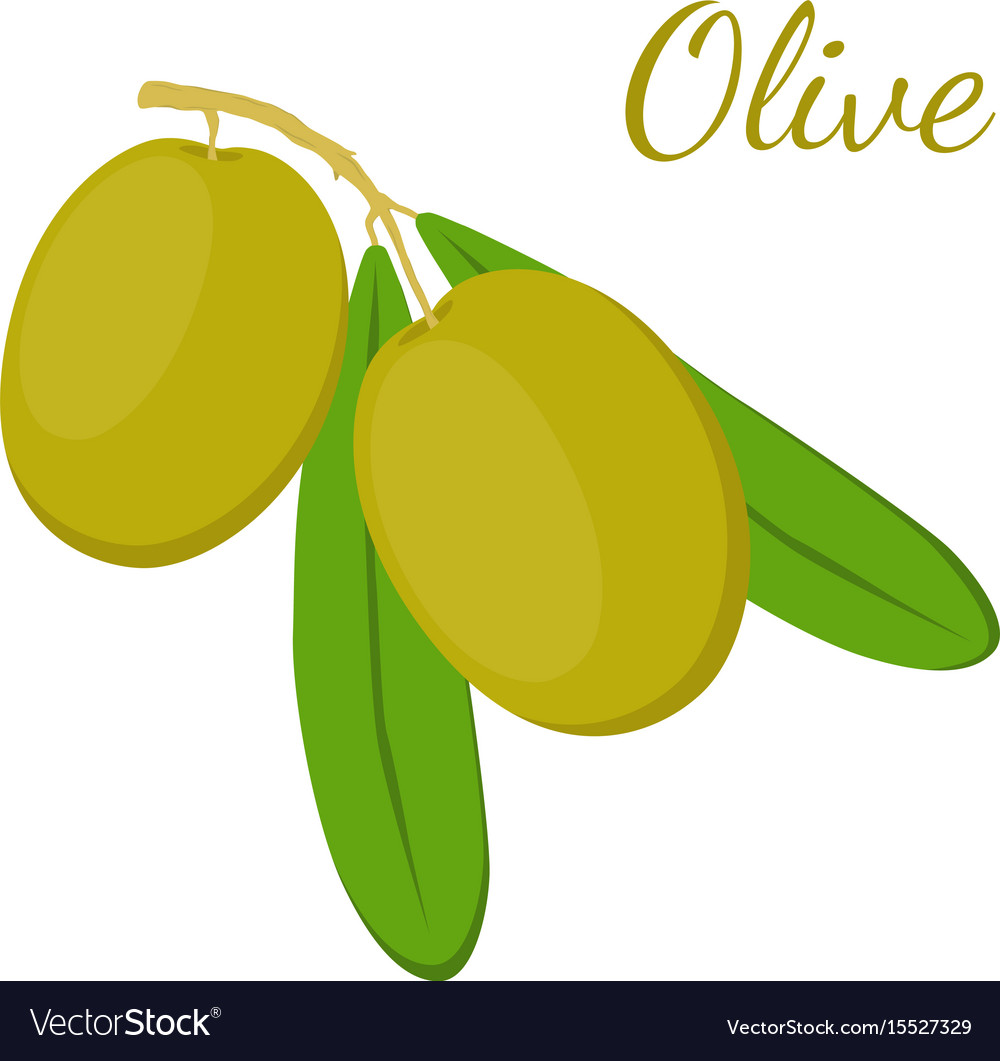 Olive branch olives cosmetics medical plant vector image