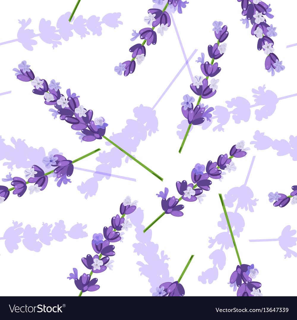 Lavender flowers seamless pattern vector image