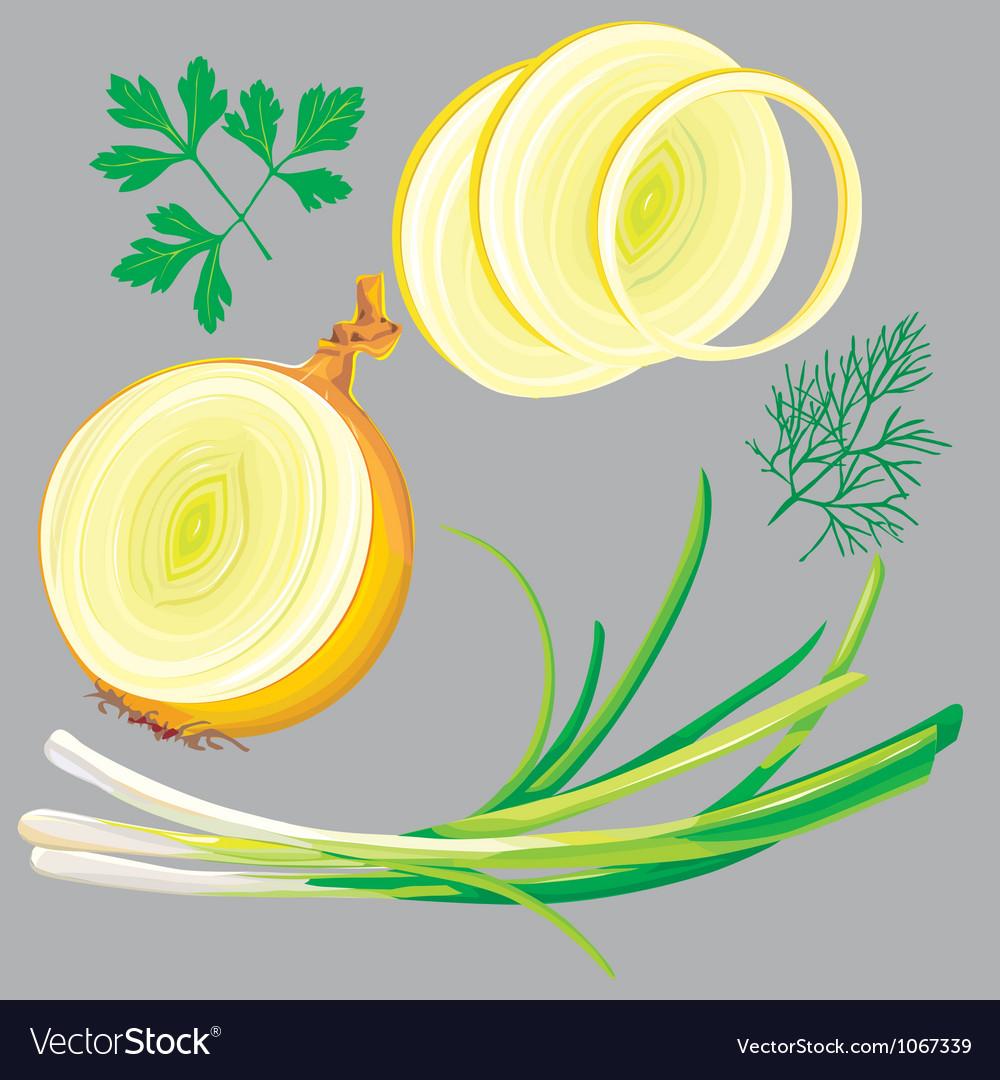 Spring onion parsley dill greens