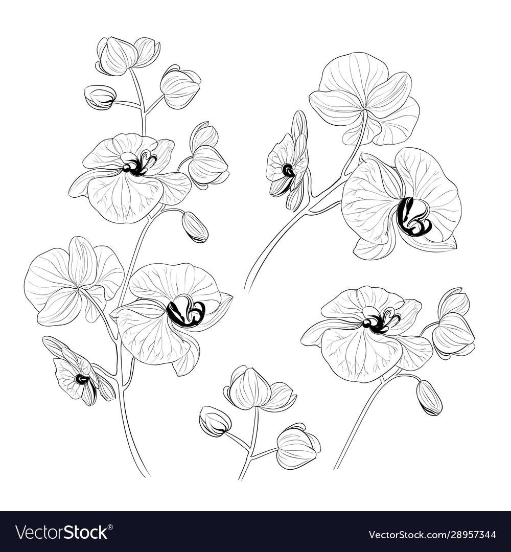 Set tropical orchid flowers elements