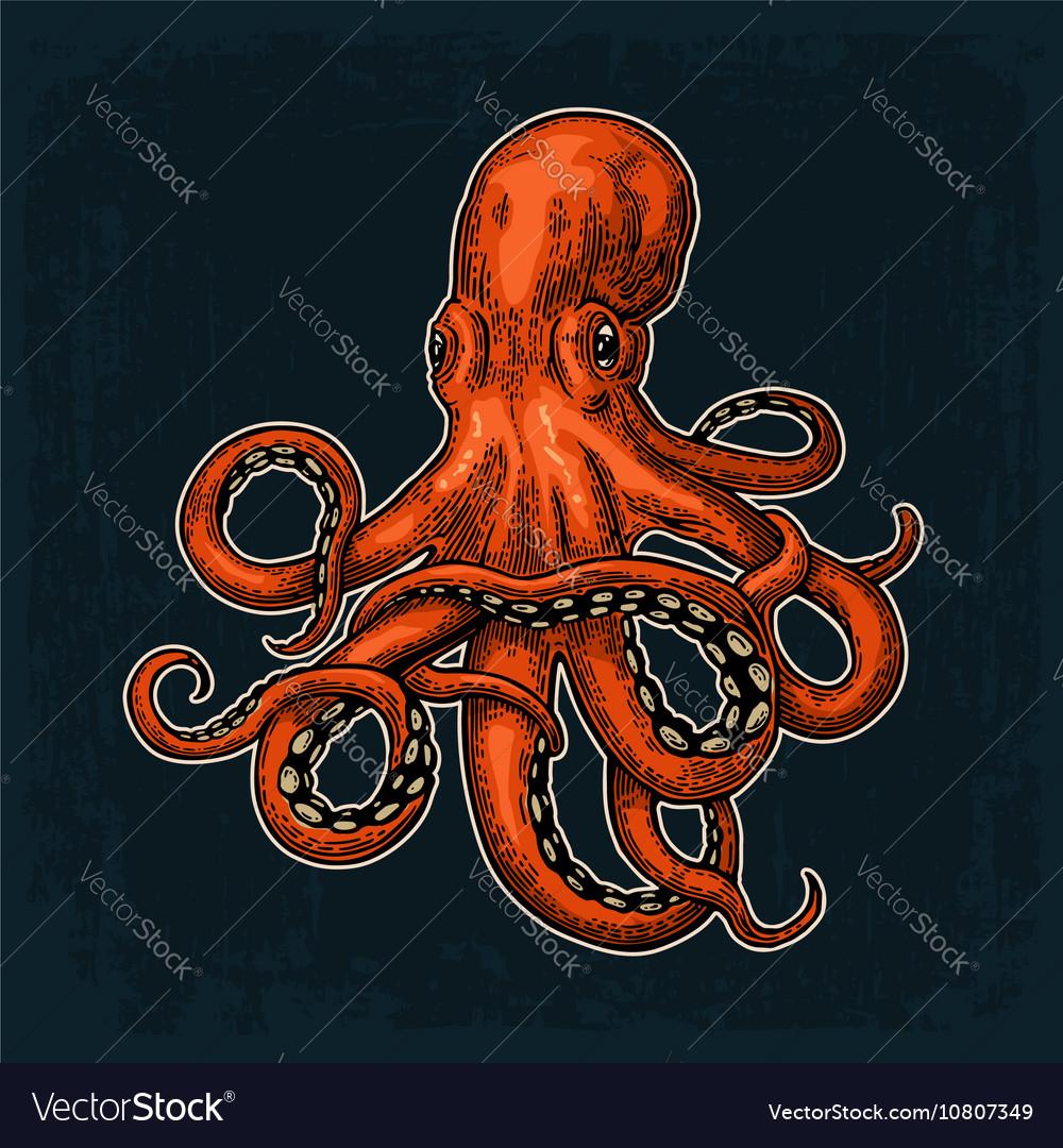 octopus sea monster royalty free vector image vectorstock
