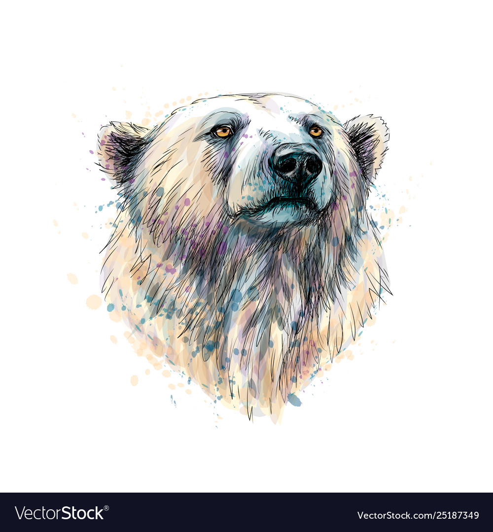 Portrait a polar bear head from a splash of vector