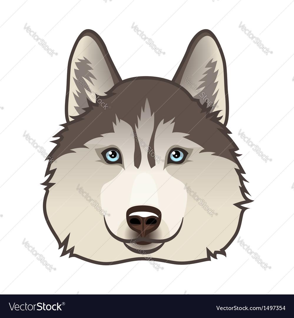 Husky vector image