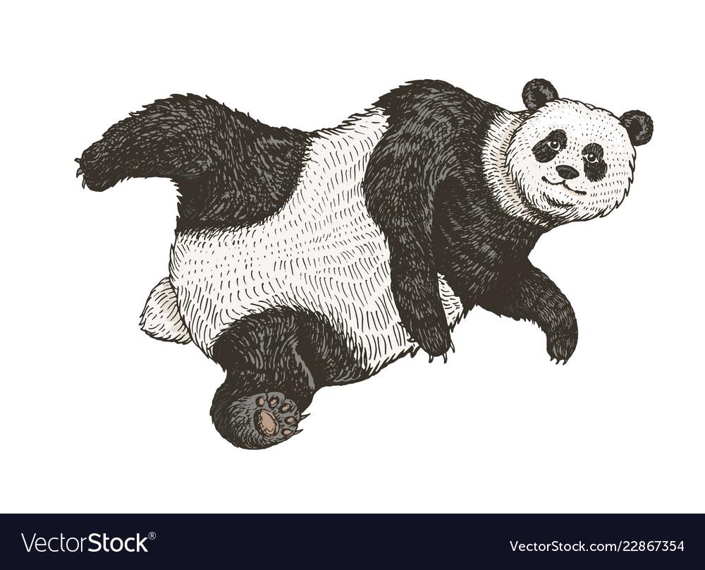 Soaring Giant Panda A Wild Cute Animal Falls Down Vector Image