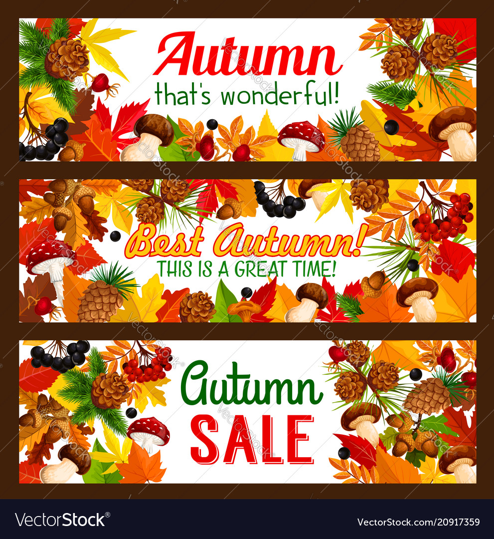 Autumn sale offer banner with fall nature frame