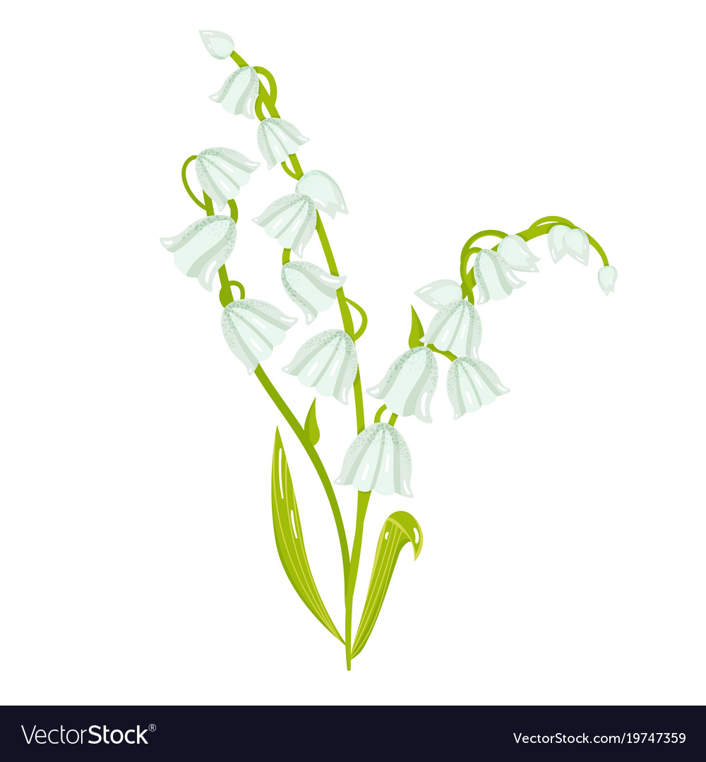 Cartoon lily of the valley spring flower vector image izmirmasajfo