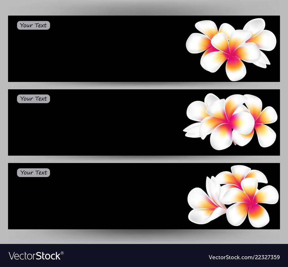 Hawaii Flower Frangipani White Plumeria Brochure Vector Image