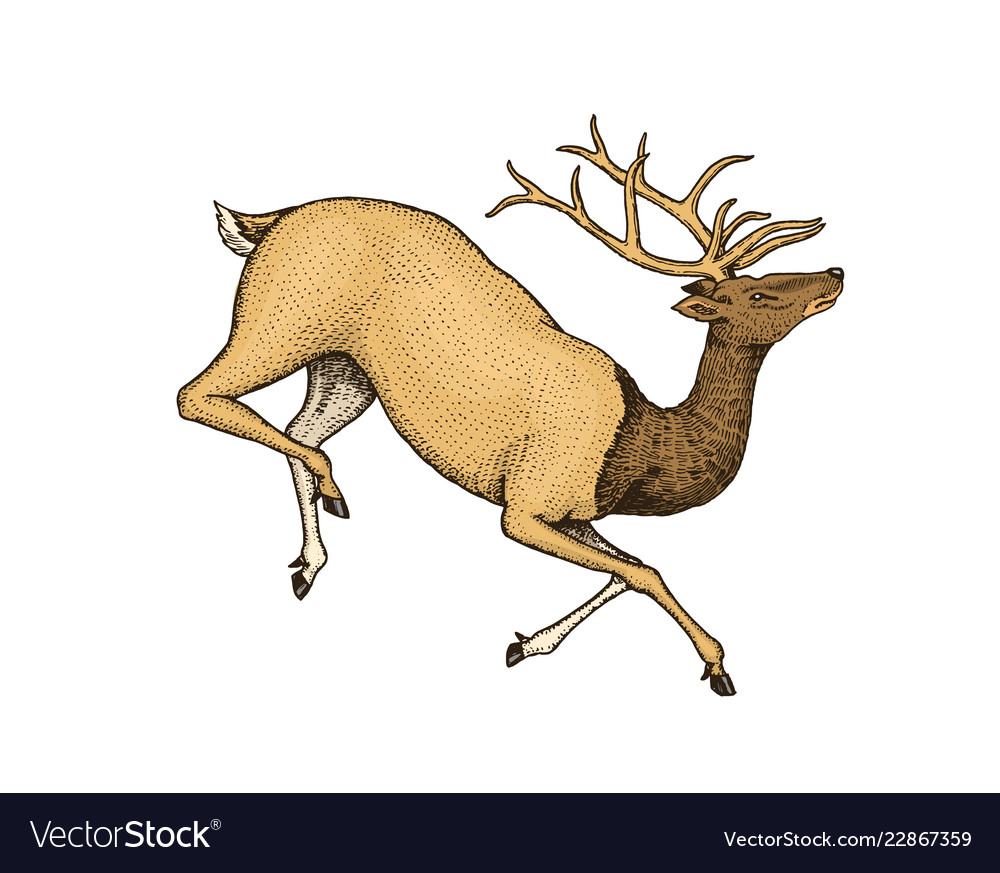 Soaring deer wild animal jumping horned mammal