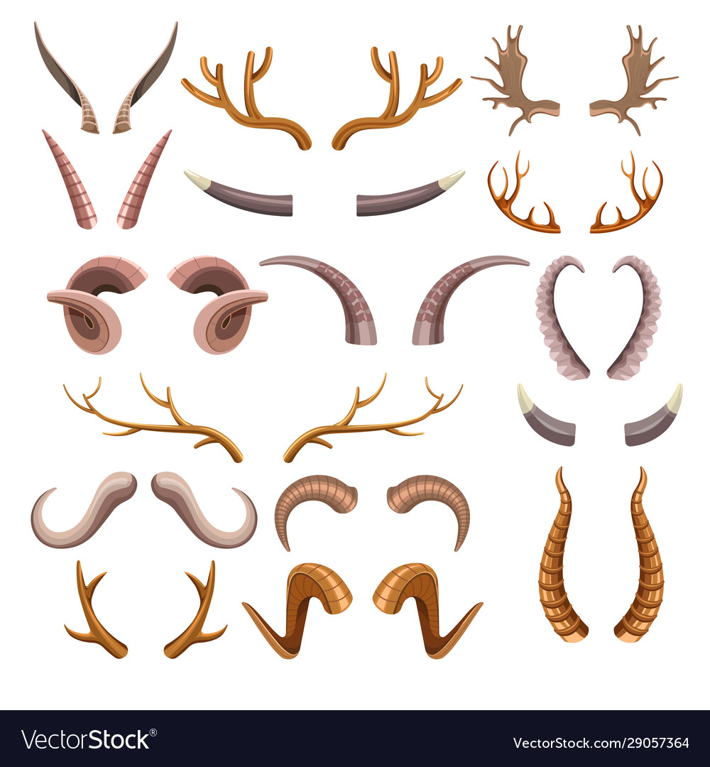 Horns collection with colorful hunting trophies of