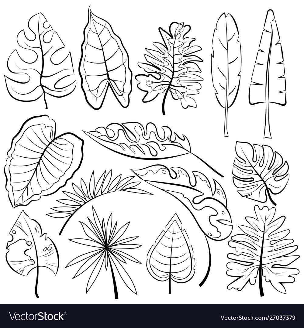 Leaves tropical leaves