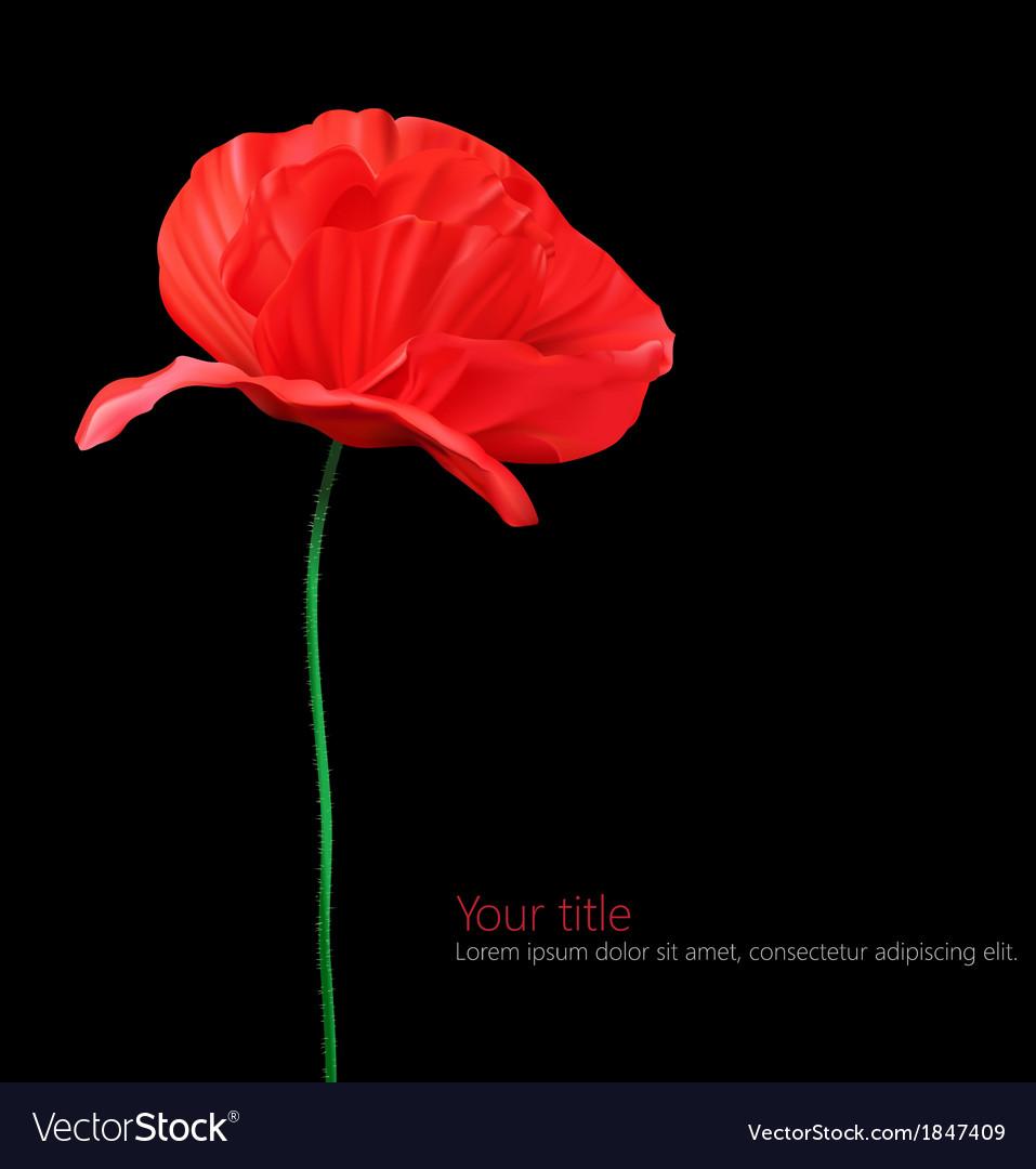 Poppy flower isolated on black background vector image mightylinksfo