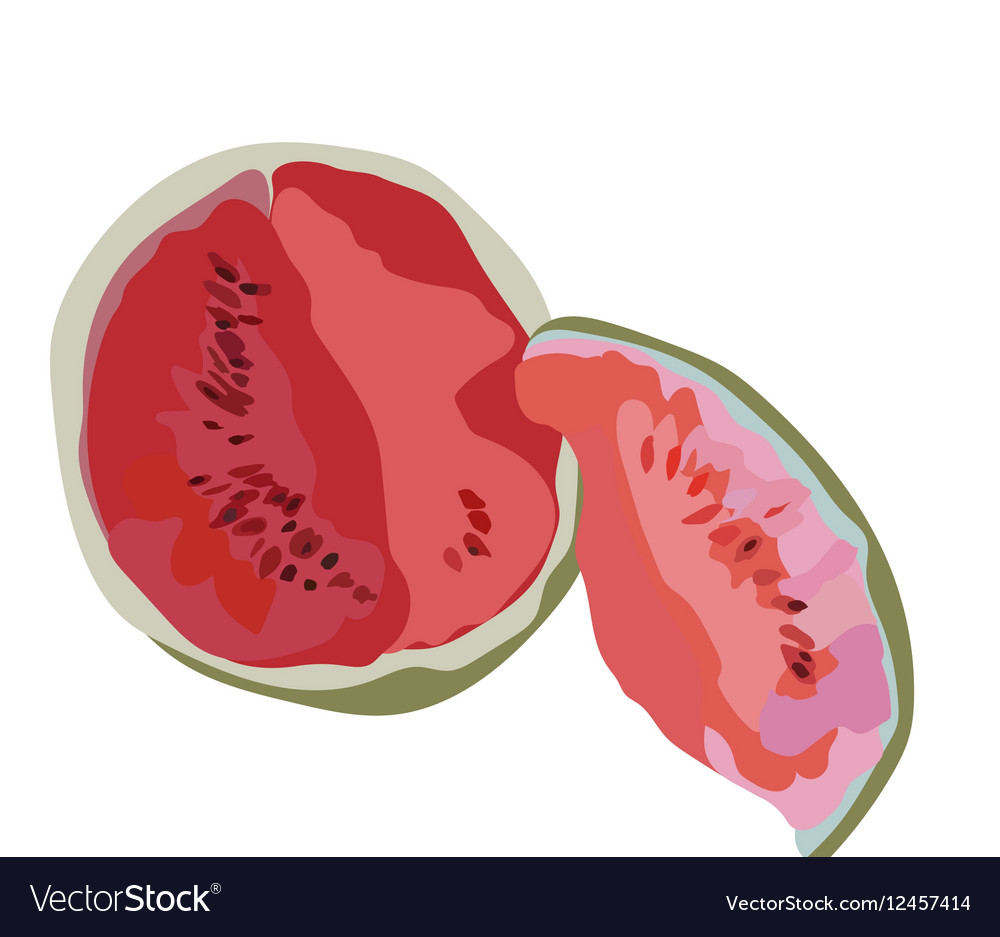 Watermelon Isolated on white vector image