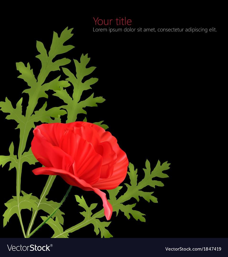 Poppy flower isolated on black background