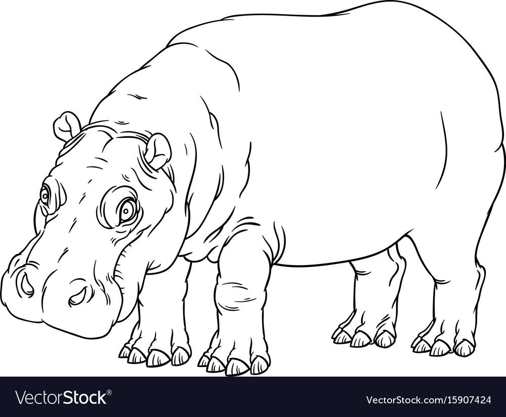 Hippopotamus amphibius or river horse