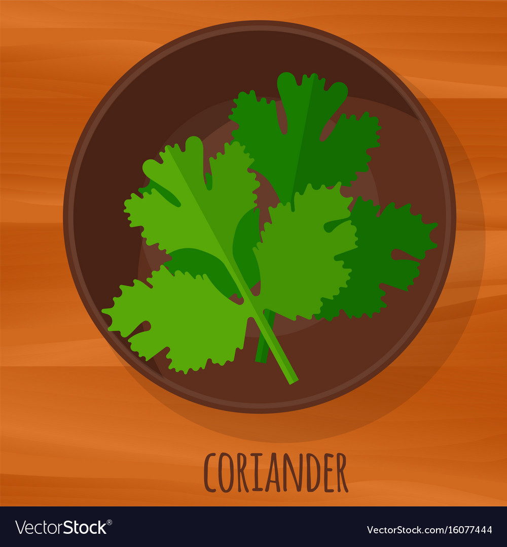 Coriander flat design icon
