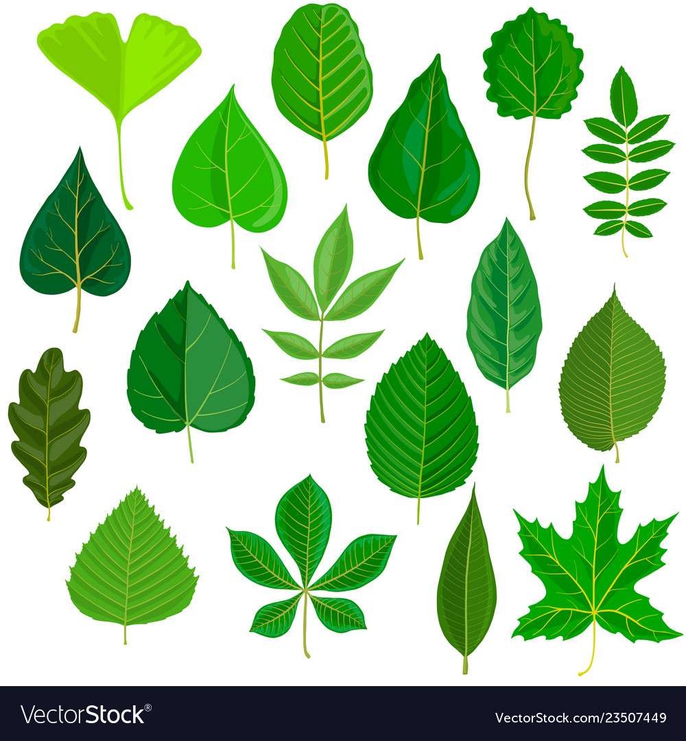 Set of tree leaves