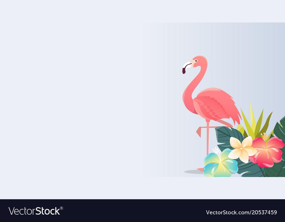Flamingo bird design on white background