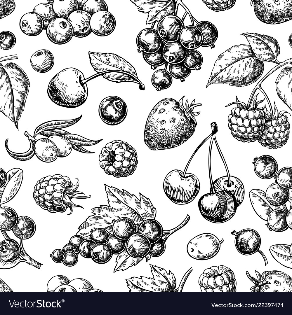 Wild berry seamless pattern drawing hand drawn