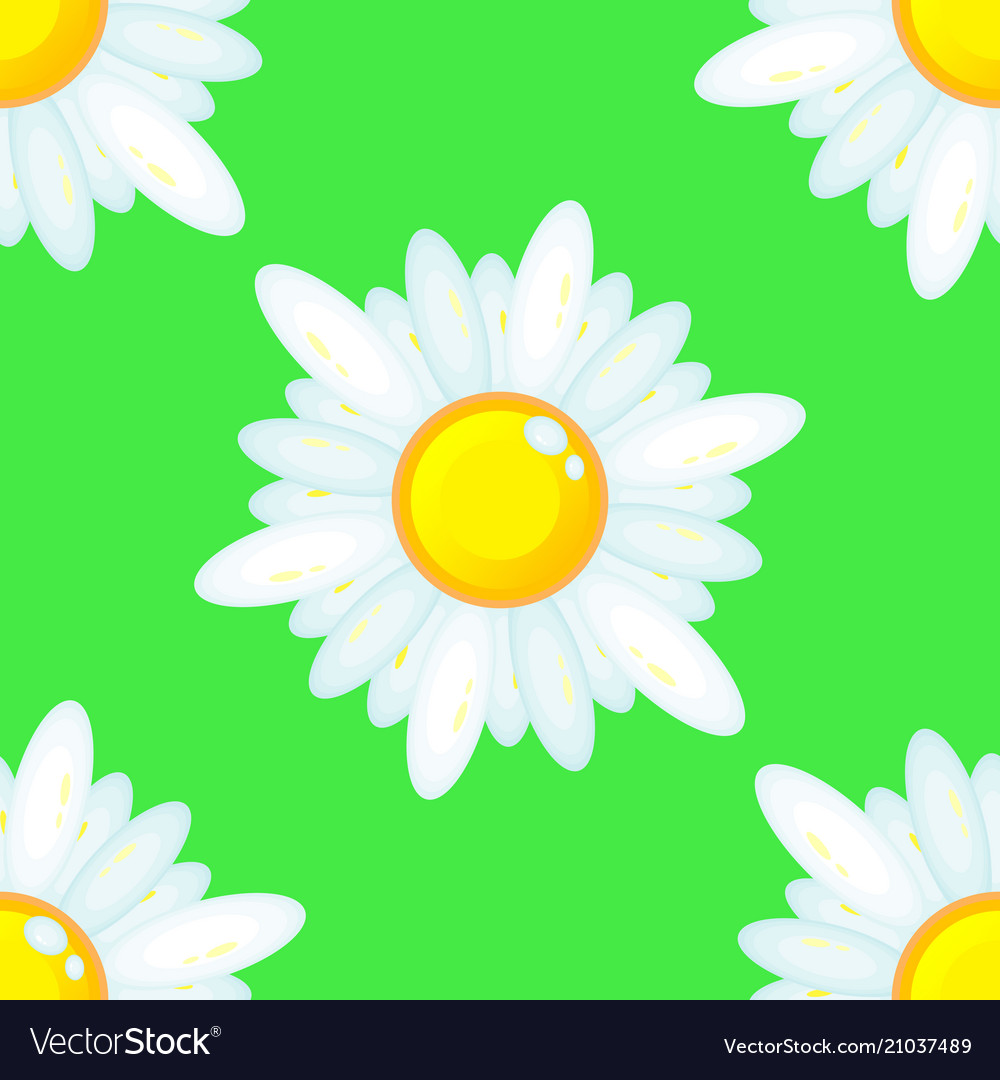 Summer seamless pattern with chamomile flowers