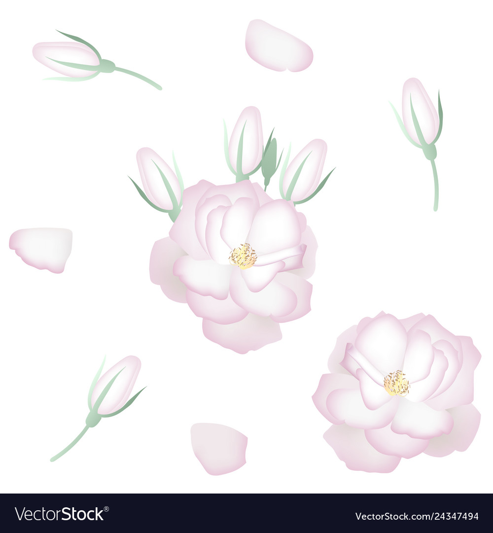 Set realistic white roses petals and buds