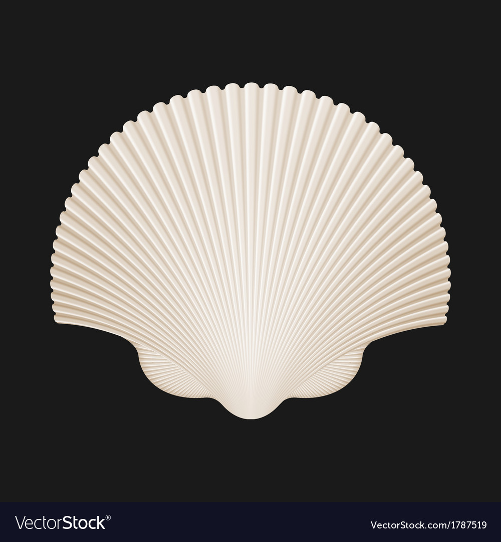 Brown Scallop Shell Isolated On Black
