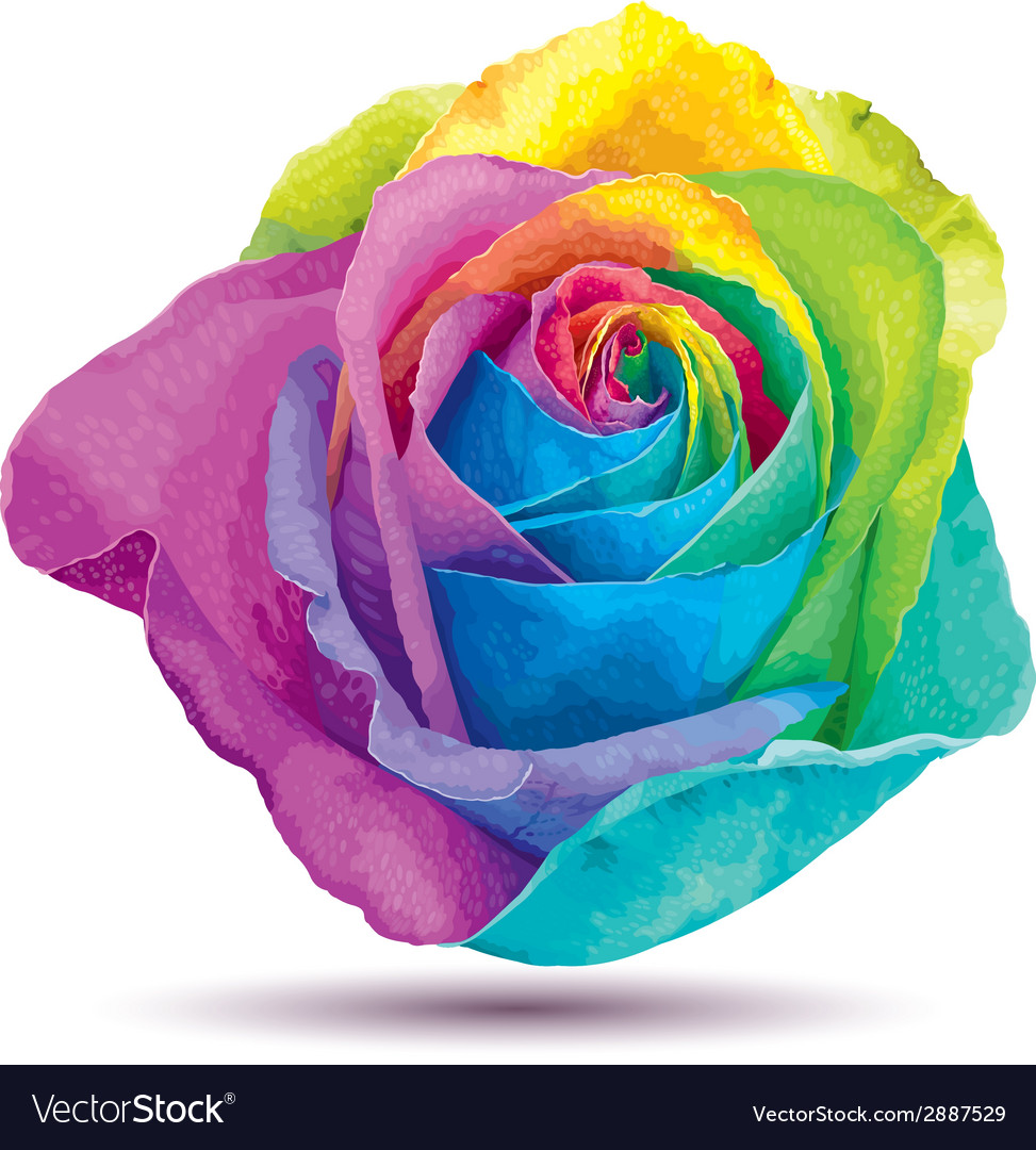 Raibow rose vector image