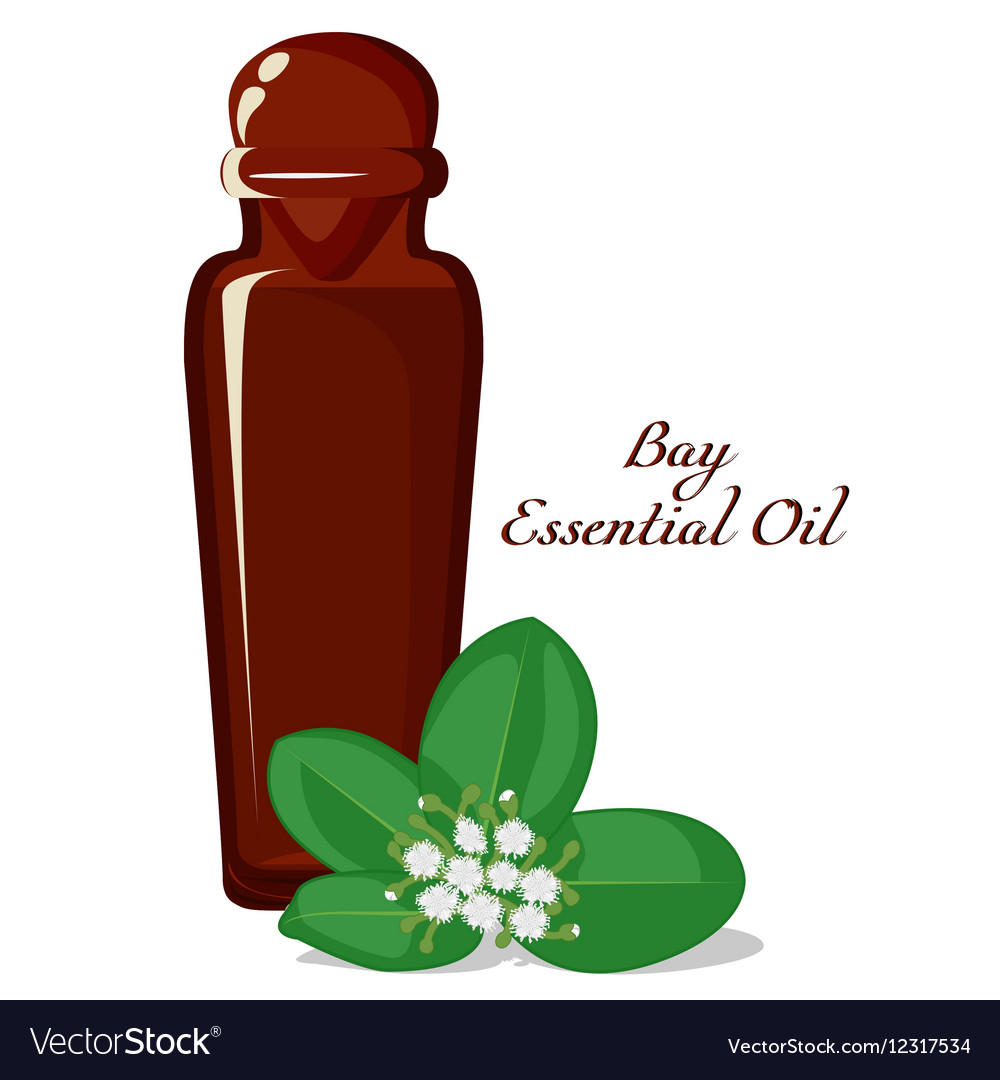 Essential oil of Bay tree