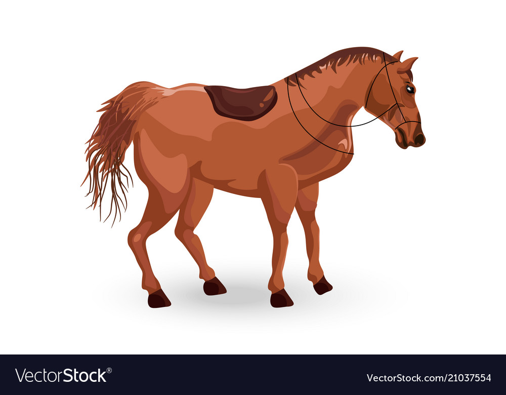 Horse isolated detailed animal