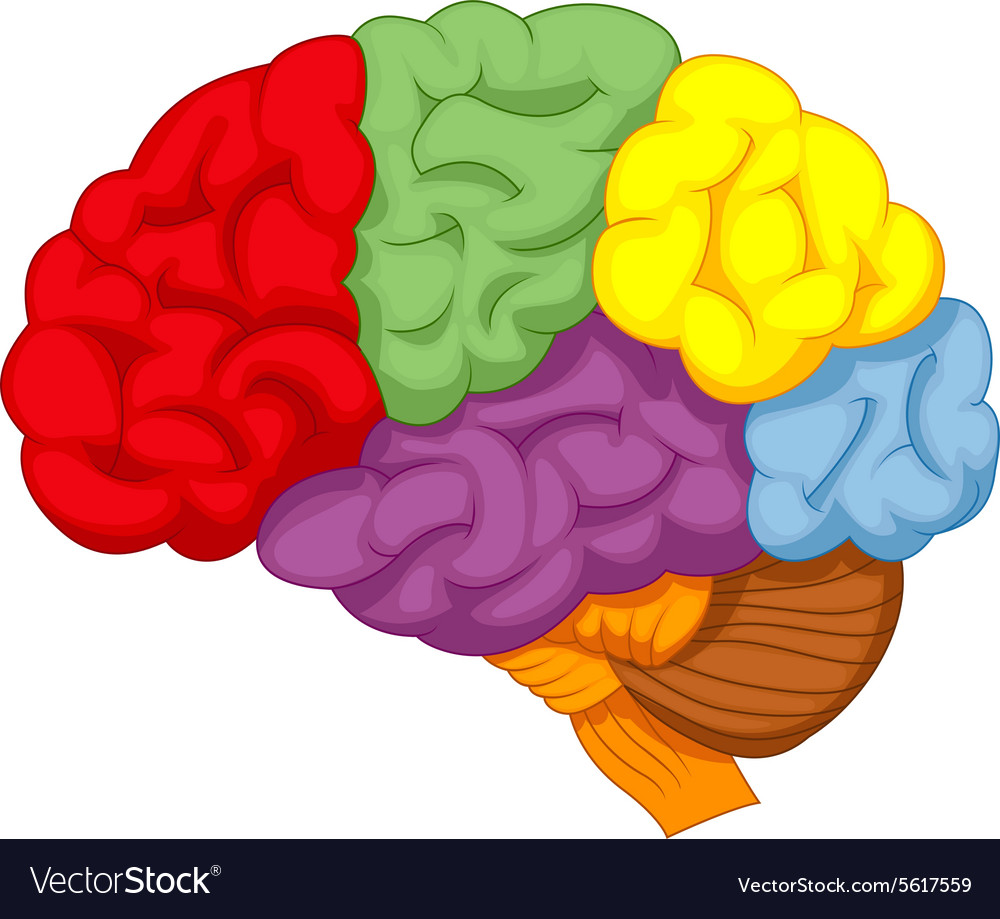 cartoon colorful brain royalty free vector image rh vectorstock com
