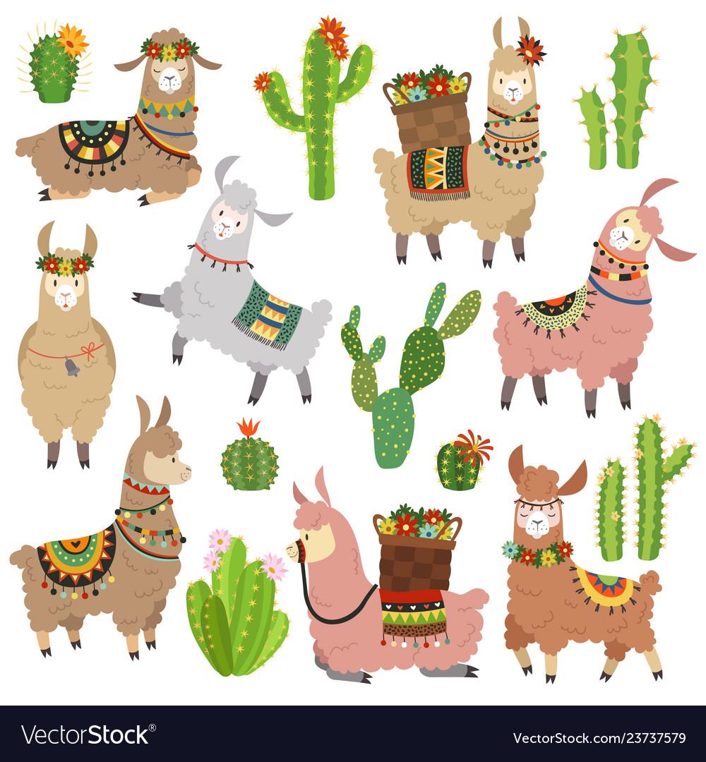 Llama cactus chile llamas alpaca and cacti wild