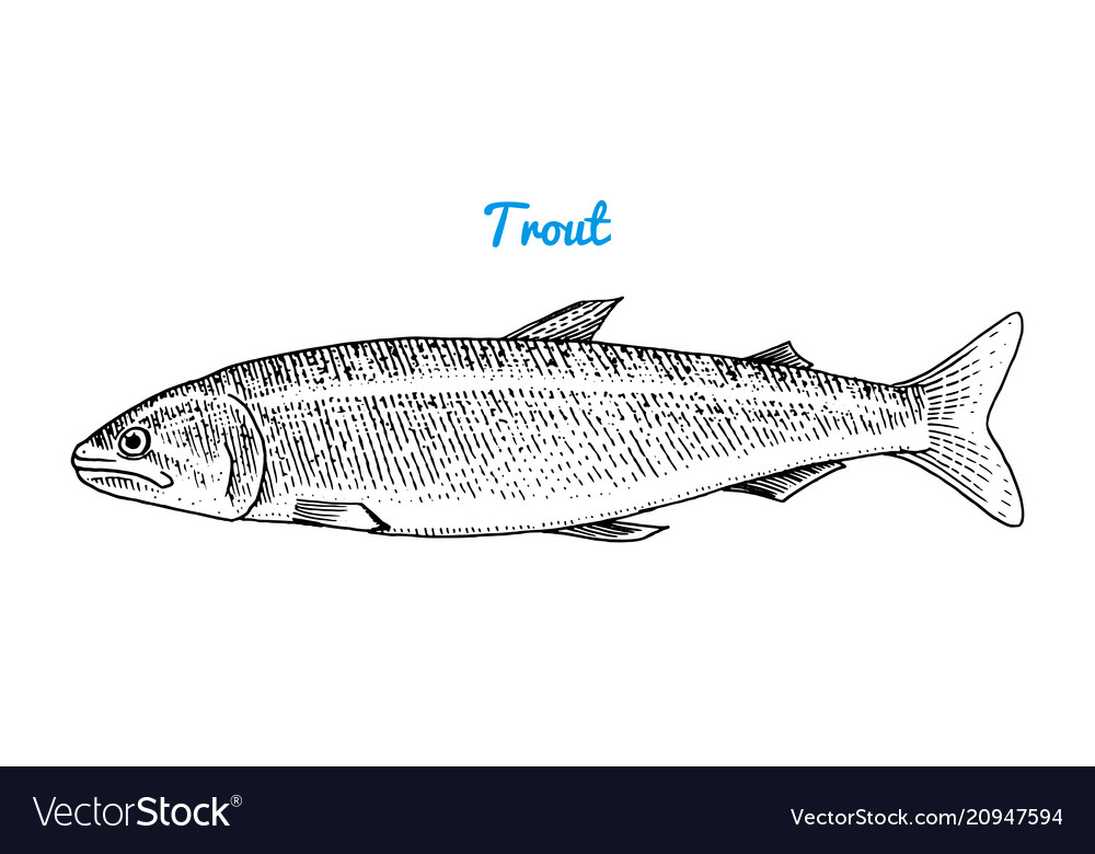 River trout and lake fish sea creatures