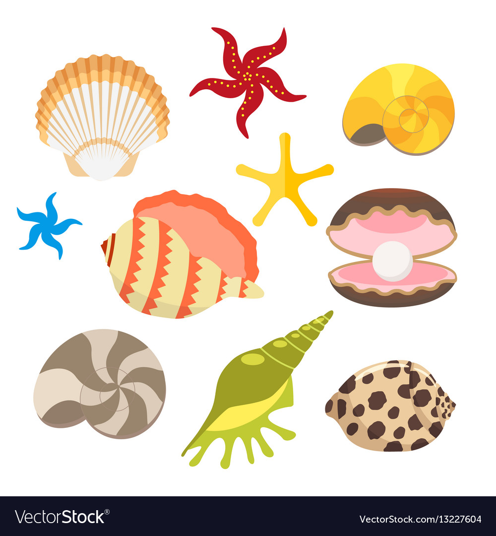 Set of sea shells oysters with pearls and sea vector image