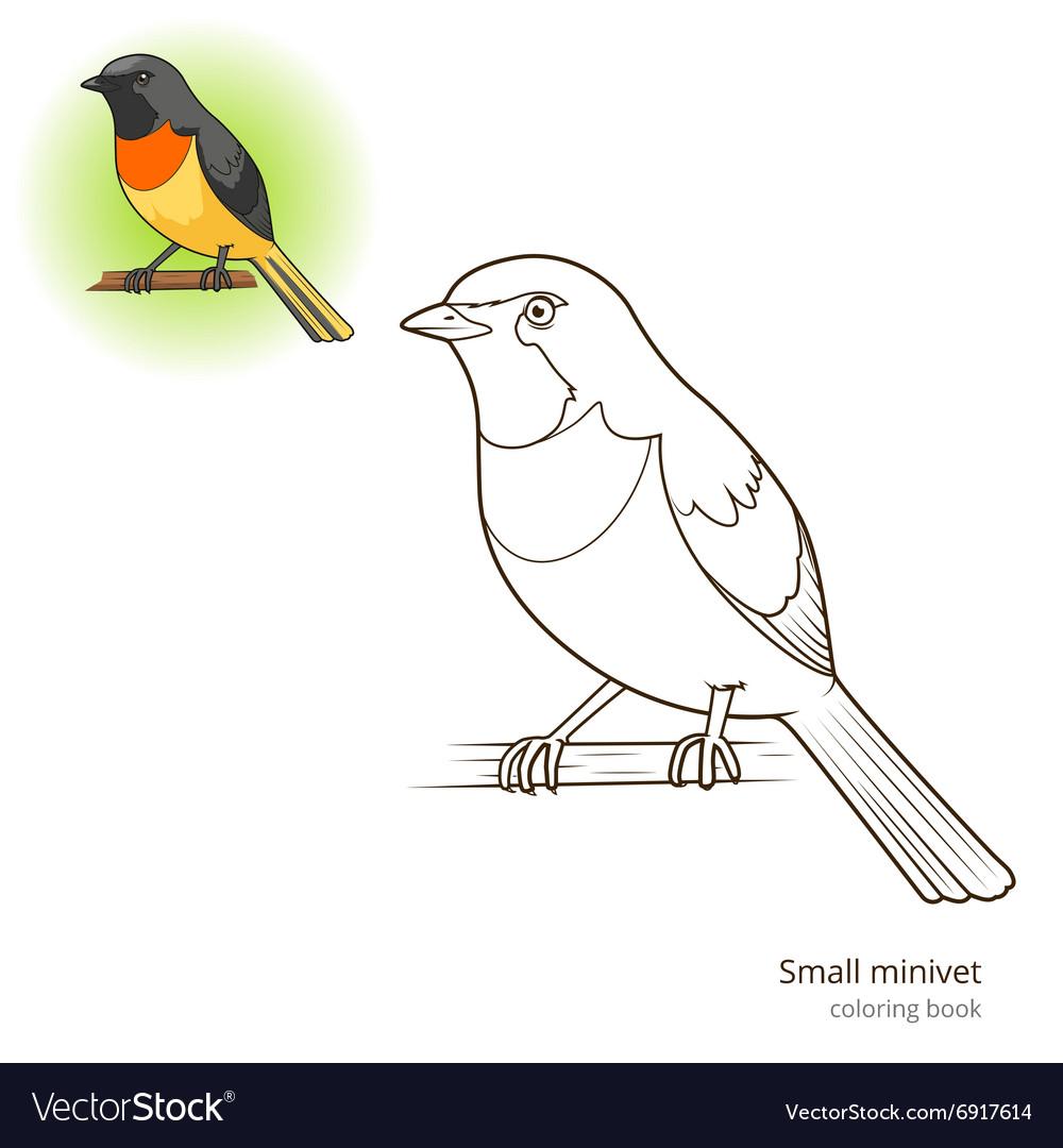 - Small Minivet Bird Coloring Book Royalty Free Vector Image